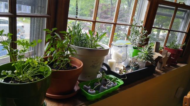 kitchenwindowsill